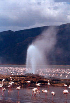 Lake Bogoria Hot Springs.